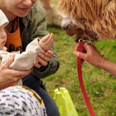 dzieci poznają zwierzęta 11