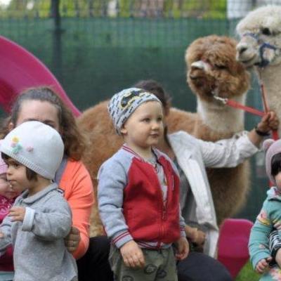 dzieci poznają zwierzęta 14