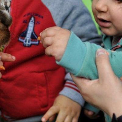 dzieci poznają zwierzęta 8